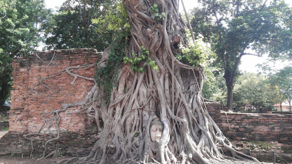 Thailande Boudha arbre tete